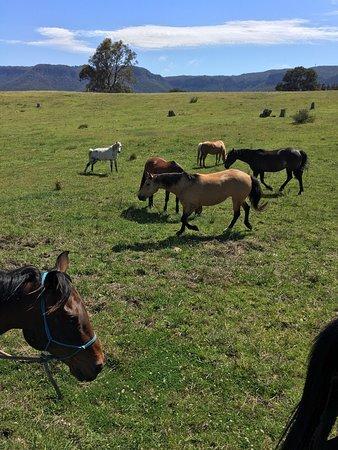 Blackheath, Australia: photo1.jpg