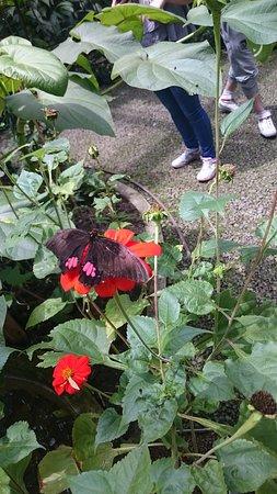 Jardin Botanico de Medellin: mariposas :)