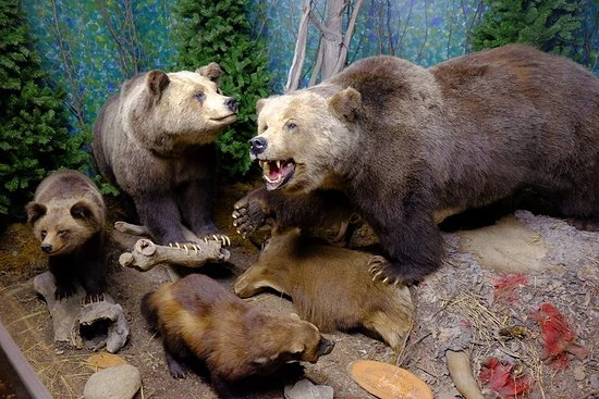 The Den - Jasper's Wildlife Museum