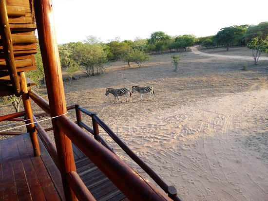 Pezulu Tree House Game Lodge-billede
