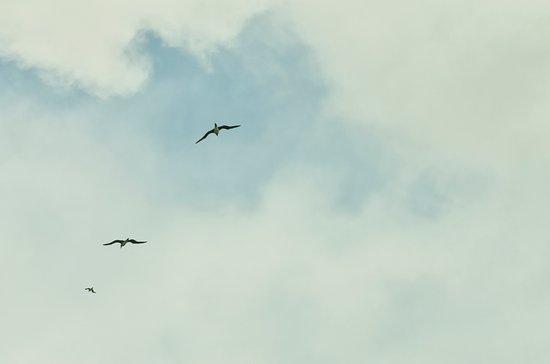 Kilauea, ฮาวาย: BIRDS IN FLIGHT