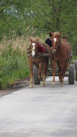 Rakhiv, أوكرانيا: Horse cart