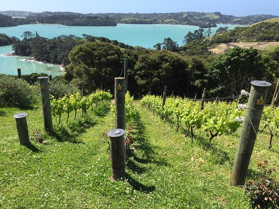 جزيرة واهيكي, نيوزيلندا: photo1.jpg