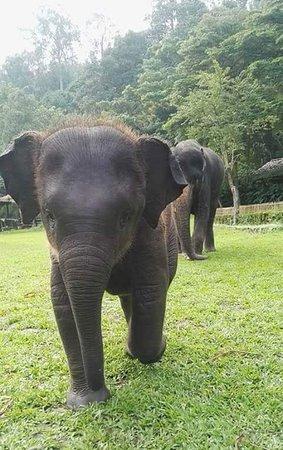 Lanna Boutique Travel: Baby elephant