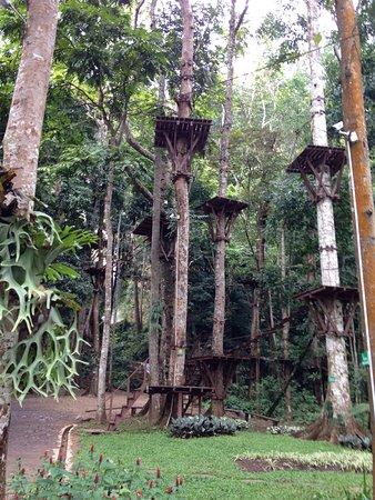 Green Jungle Flight