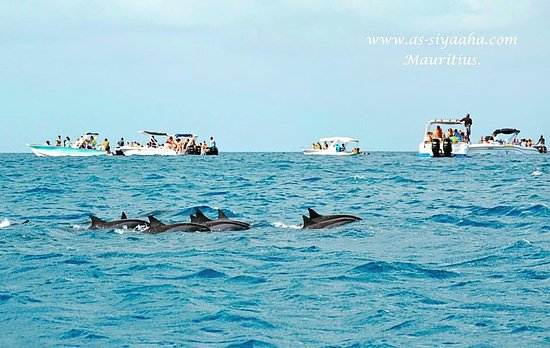 Tamarin Bay: Dolphin Attractions with As-Siyaaha Tour Operator in our paradise island, Mauritius