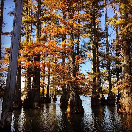 Stanton, TN: Cypress Trees at O'Neal Lake - Hatchie National Wildlife Refuge