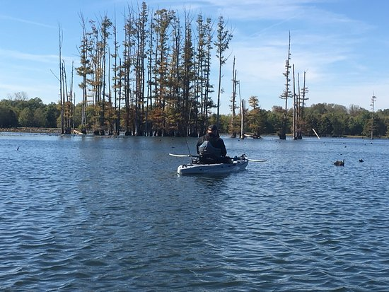 Stanton, TN: Kayaking O'Neal Lake - Hatchie Wildlife Refuge