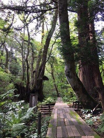Tajima Kogen Botanical Garden