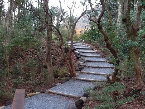 Horai Garden: 蓬莱橋を渡ると緩やかな登り道が園へ誘います。この写真は12月に行った時のもの。花のない時はさみしかったです