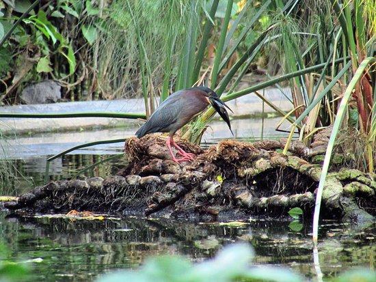 Pozo de los deseos picture of jardin botanico la laguna for Jardin botanico el ejido