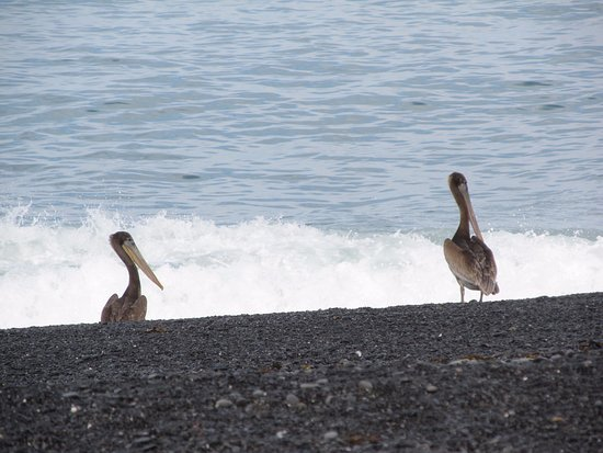 Shelter Cove, Califórnia: loved the pelicans!