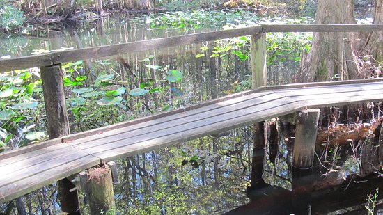 Sebring, FL: Cat walk over pond