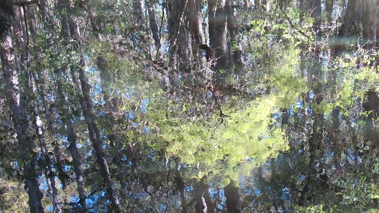 Sebring, FL: Monet's vision brought to life in the park setting