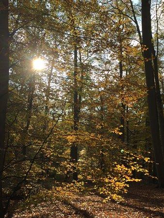 Vieux-Moulin, France: Beau soleil de novembre au cœur de la forêt de compiegne que traverse Vieux moulin