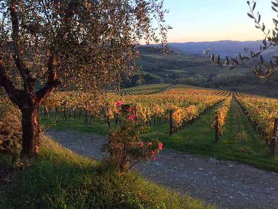 Villa Pecille (Azienda Agricola Fontodi S.S.): View from the Villa and sunset