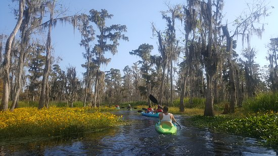 Honey Island Kayak Tour
