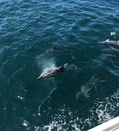 Whale Watchers Hermanus: Dolphins