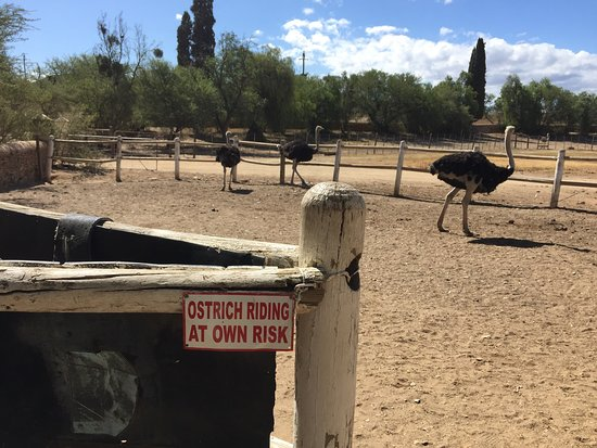 Chandelier Game Lodge & Ostrich Show Farm: photo1.jpg