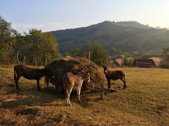 Cund, رومانيا: the donkey farm in Cund