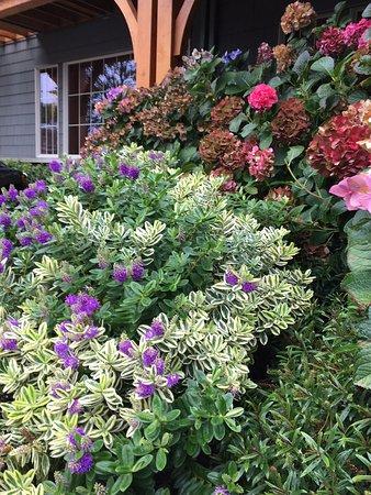 Stephanie Inn: Landscaping at entrance