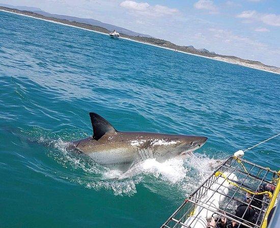 Great White Shark Tours: photo0.jpg