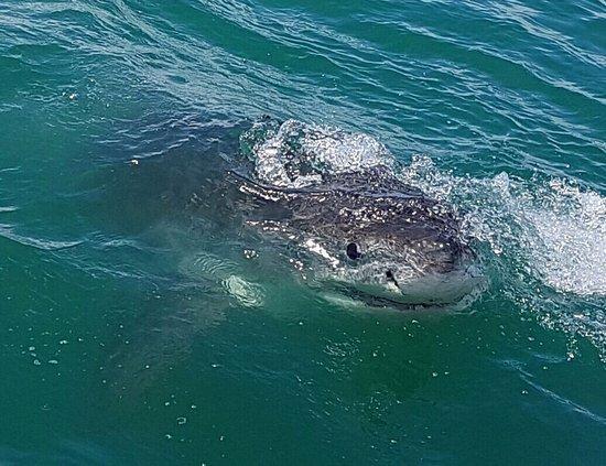 Great White Shark Tours: photo1.jpg