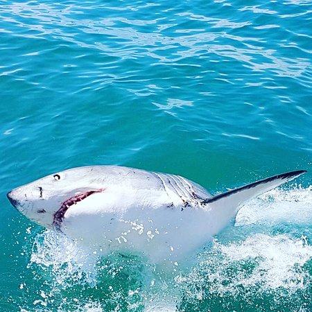 Great White Shark Tours: photo2.jpg