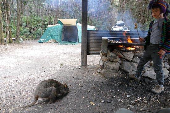 Corinna, Australia: photo2.jpg