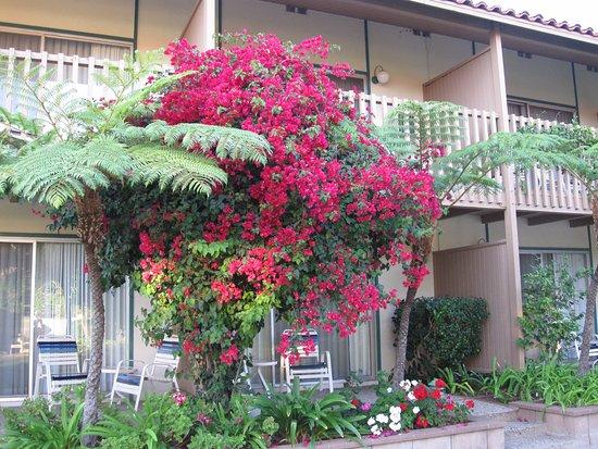 Bilde fra BEST WESTERN PLUS Pepper Tree Inn
