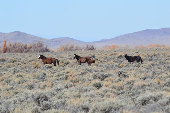 Fort Garland, CO: wild horses with foal