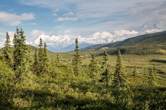 Camp Denali: View from Avalanche log cabin