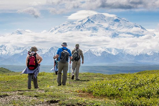 Camp Denali: Walking on the alpine tundra in Denali National Park