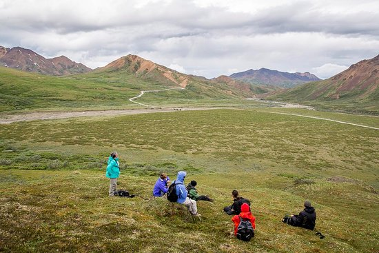 Camp Denali: Day out on the alpine tundra in Denali National Park