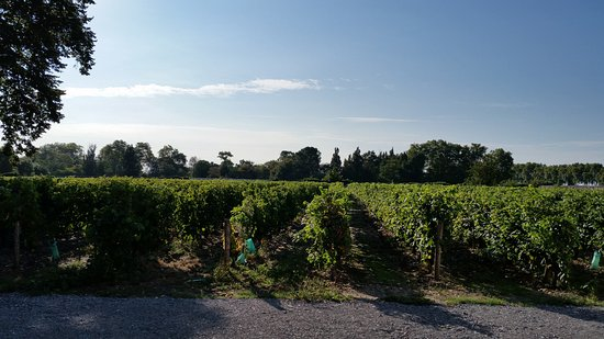 Chateau de Beau Site: The vineyard view from our room.