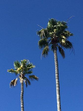 BEST WESTERN PLUS Island Palms Hotel & Marina: photo1.jpg