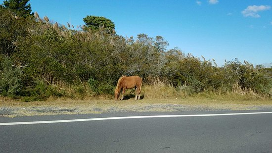 Assateague Island National Seashore: 1478529296791_large.jpg