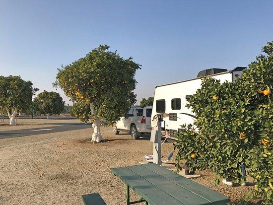 Orange Grove RV Park Site