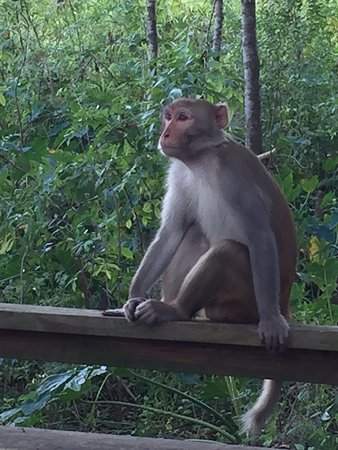 Silver Springs State Park: wild monkey in silver springs park