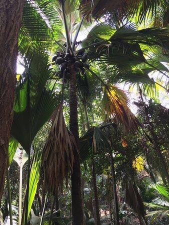 Praslin Island, Seychellerne: Fond Ferdinand