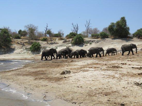 Kasane, Botsuana: Just leaving the water & heading back into Chobe National Park