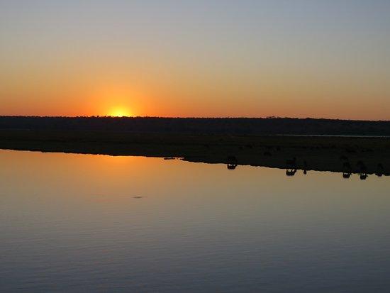 Kasane, Botsuana: Sunrise from Zambezi Queen - animal reflections