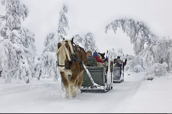 Ringebu Municipality, Norwegen: Venabus Horsesledgeactivities