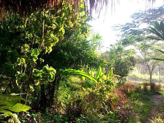 Le Jardin Devant La Maison Picture Of Isara Garden Pai