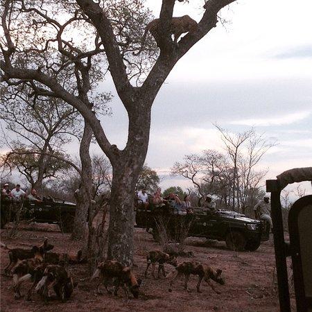 Notten's Bush Camp: photo1.jpg