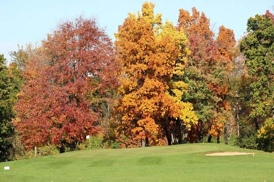 Haslett, MI: #2 Green in Full Fall Color