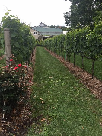 Afton, VA: Walk through the vineyard