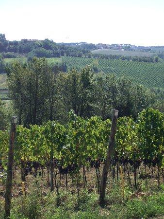 Agriturismo Spazzavento: La vigne de Daniele