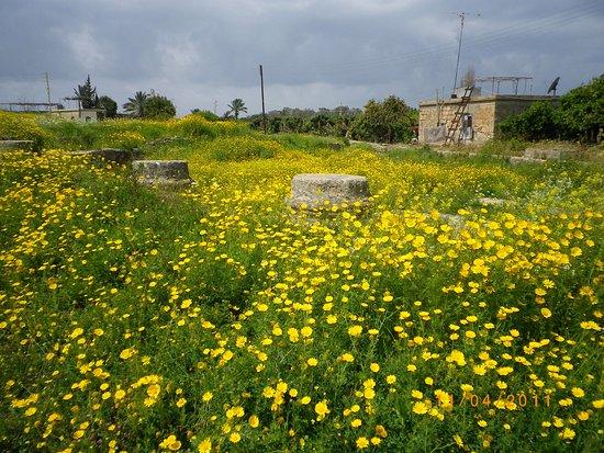 Sidon, Lebanon: Blommor inuti det antika templets område.