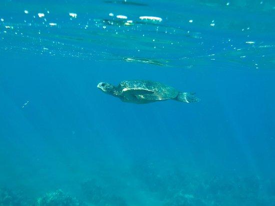 Maalaea, Hawaï: Turtle town